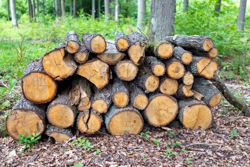 En hög av trä vid en skogväg Trä förberedde sig för export från skogen royaltyfri fotografi