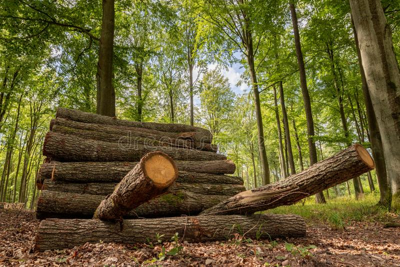 En hög av trä vid en skogväg Trä förberedde sig för export från skogen arkivfoto