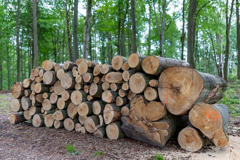 En hög av trä vid en skogväg Trä förberedde sig för export från skogen royaltyfri foto