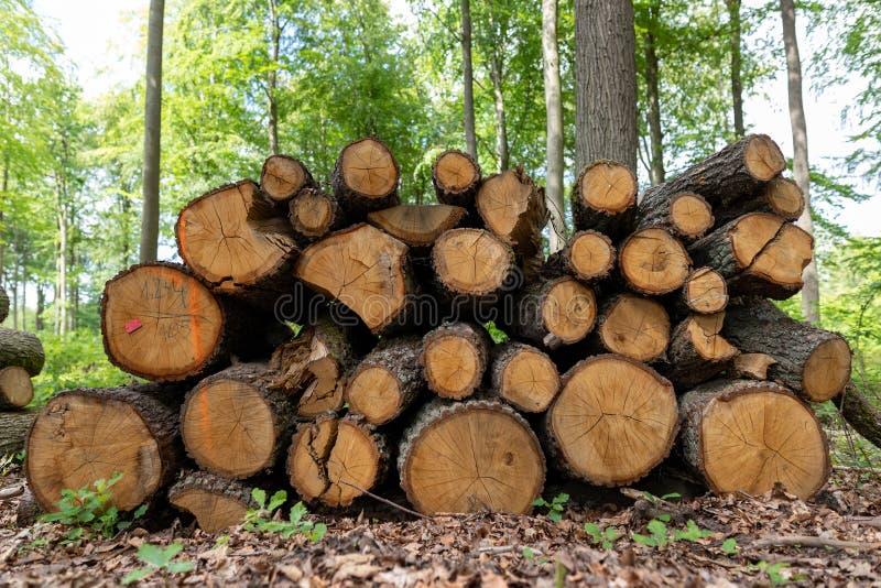 En hög av trä vid en skogväg Trä förberedde sig för export från skogen fotografering för bildbyråer