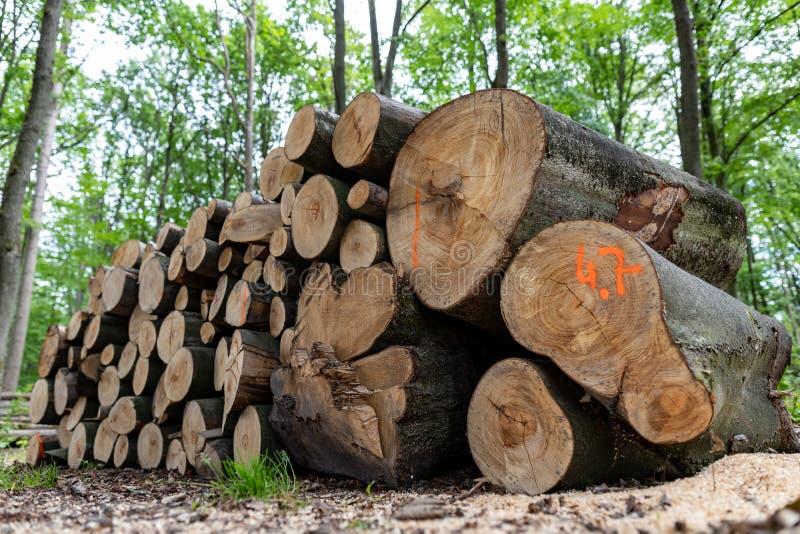 En hög av trä vid en skogväg Trä förberedde sig för export från skogen arkivbilder