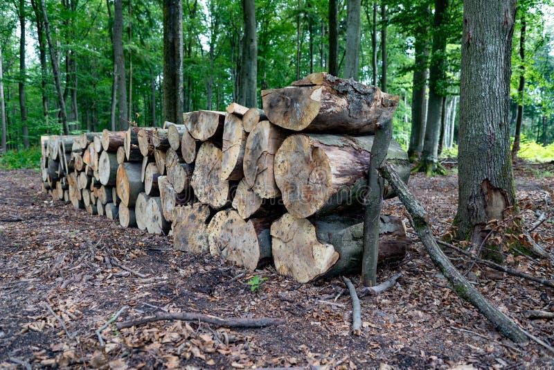 En hög av trä vid en skogväg Trä förberedde sig för export från skogen royaltyfria foton
