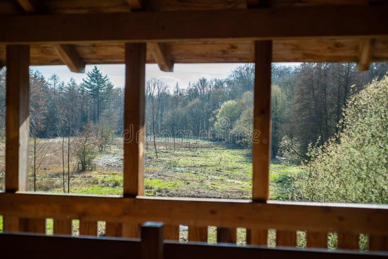 En hög höjd i en naturlig skog royaltyfri fotografi