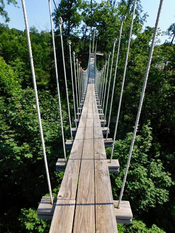 En hög repbro över skoggolvet fotografering för bildbyråer