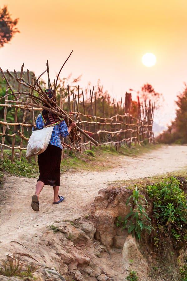 En hög vietnamesisk kvinna som bär en packe av vedträ, medan gå på en landsbana på skymning arkivbild