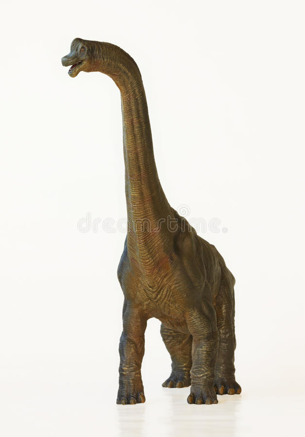 En högväxt Brachiosaurusdinosaurie eller armödla arkivfoton