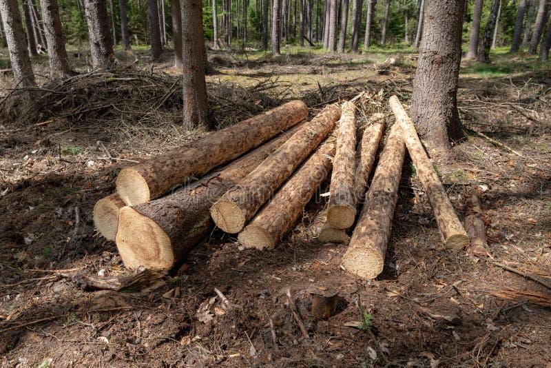 En h?g av tr? ordnade l?ngs en skogv?g Tr? som f?rbereds f?r export royaltyfri bild