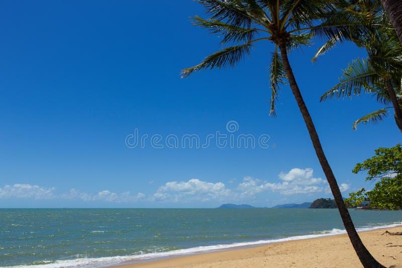 En h?rlig tropisk strand med palmtr?d i nordliga Australien, cliftonstrand, queensland, Australien arkivbilder