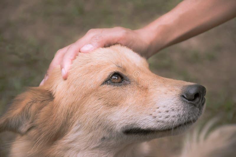En hand daltar hunden hade, filtrerad tappning royaltyfria foton