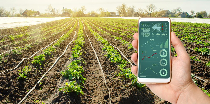 En hand rymmer en smartphone med bevattningsystemledning och analytics av data på statusen av potatisbuskar arkivfoton