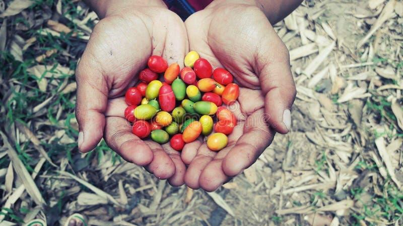 En handfull bär frukt!! royaltyfri fotografi