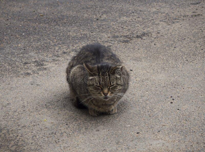 En hemlös brun katt sover på gatan royaltyfria foton
