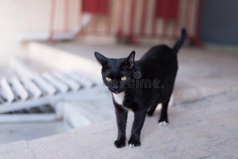 En hemlös svart katt irrar runt om gatan fotografering för bildbyråer