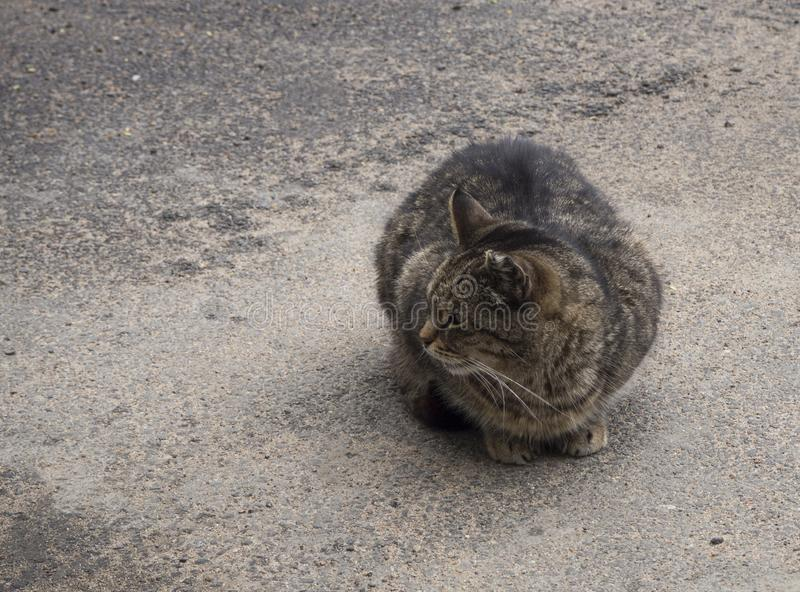 En heml?s brun katt p? gatan royaltyfria bilder