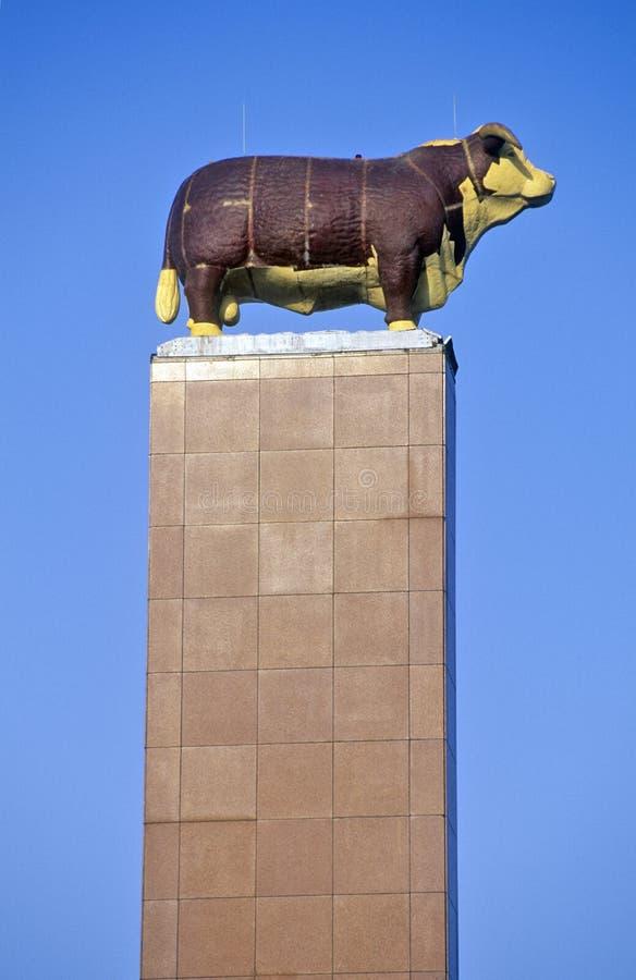 En Hereford monument står i Kansas City, Missouri som är bekant som nötkötthuvudstaden royaltyfri bild