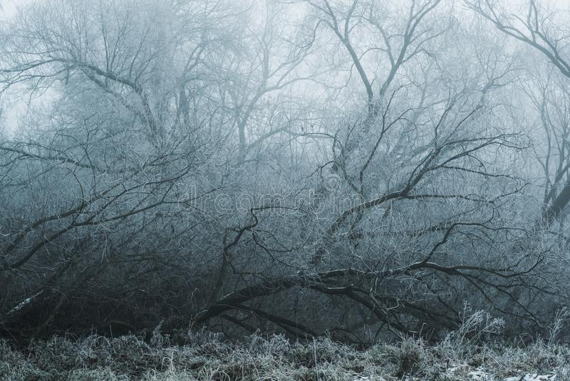 En hiver l'arbre est tombé dans le brouillard photographie stock libre de droits