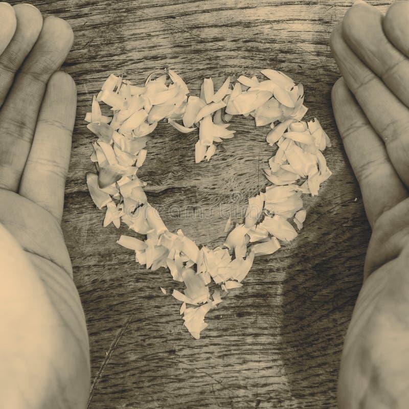 En hjärta från kronblad som ligger på en trätabell och händer royaltyfri bild
