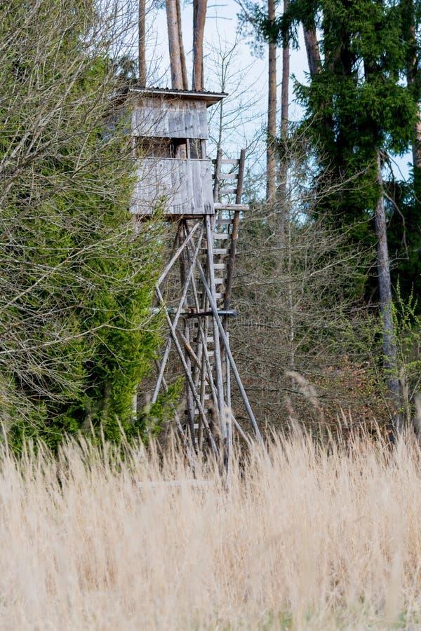 En hjort står framme av en äng i schoenben för den naturliga reserven royaltyfri fotografi