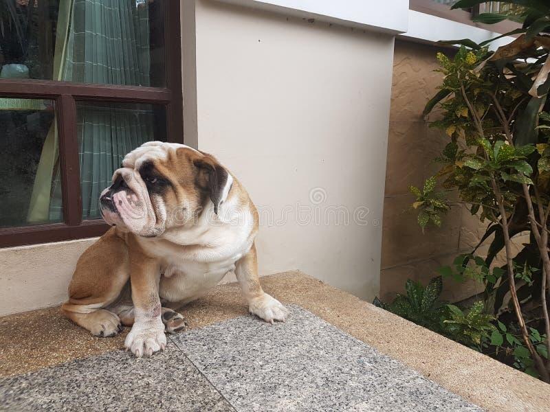 En hund royaltyfria bilder