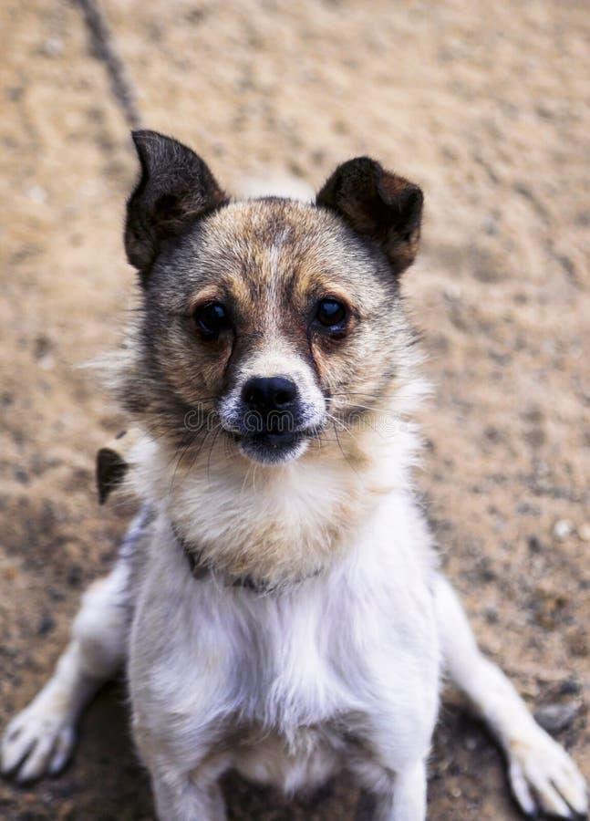 En hund royaltyfri fotografi