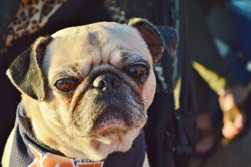 En hund royaltyfri bild