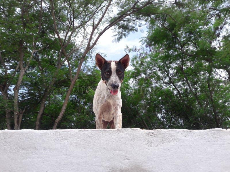 En hund royaltyfria foton