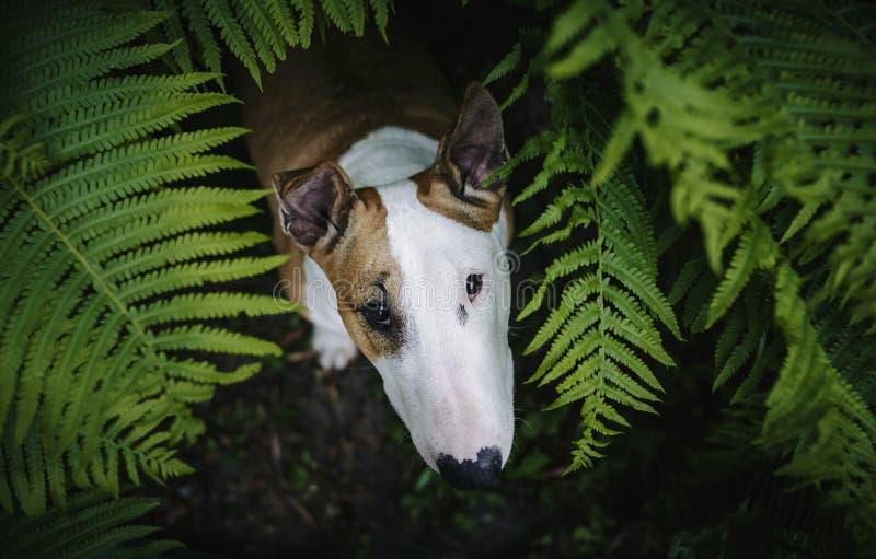 En hund i en mystisk skog arkivfoto