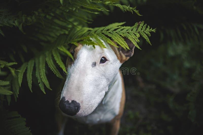 En hund i en mystisk skog arkivfoton