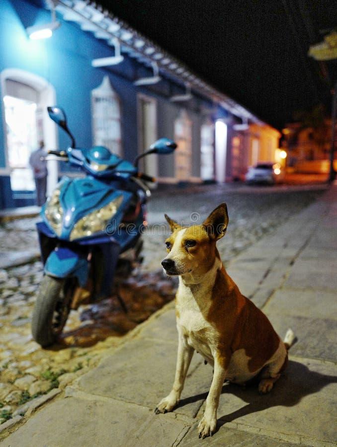 En hund på gatan av Trinidad, Kuba royaltyfria bilder