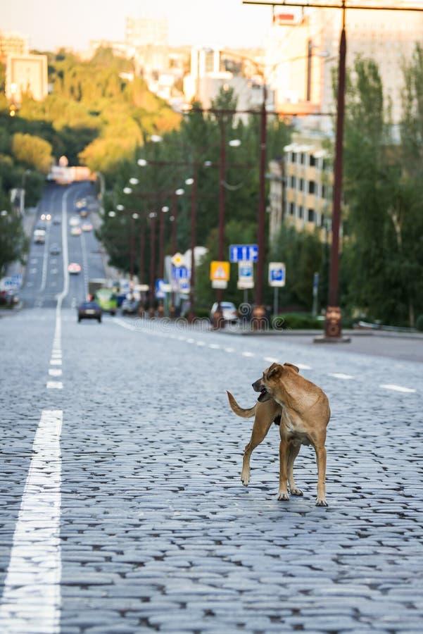En hund på körbanan royaltyfri foto