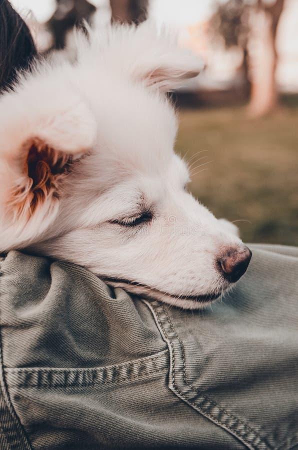 En hund p? skuldran royaltyfri foto