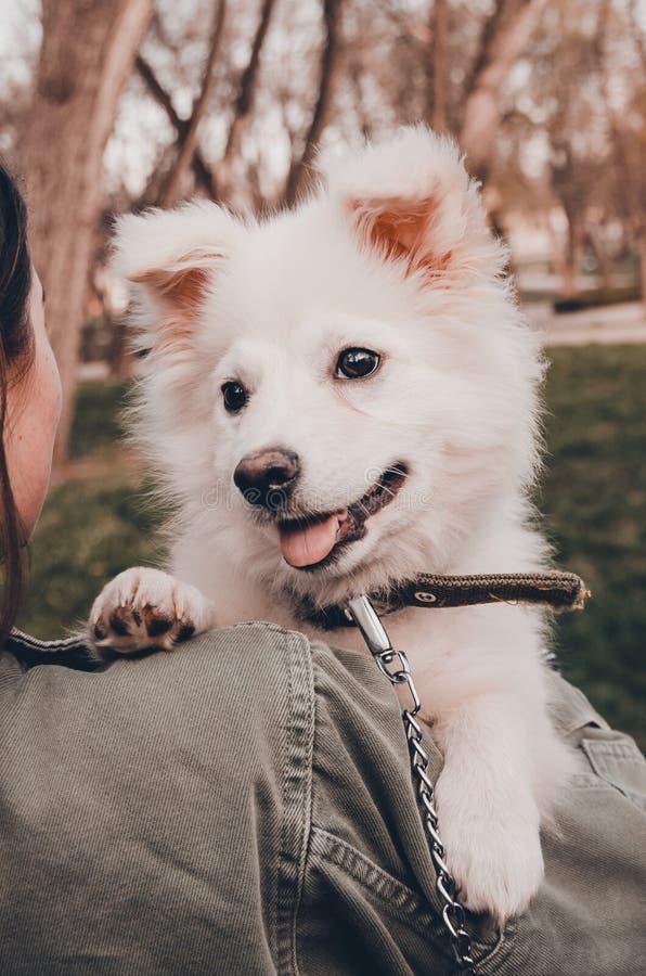 En hund p? skuldran royaltyfria foton