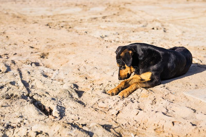 En hund som ligger på sand på stranden, med ledsna ögon och, blöter päls fattigt ensamhethusdjur Ensam hund som väntar på dess äg royaltyfri foto
