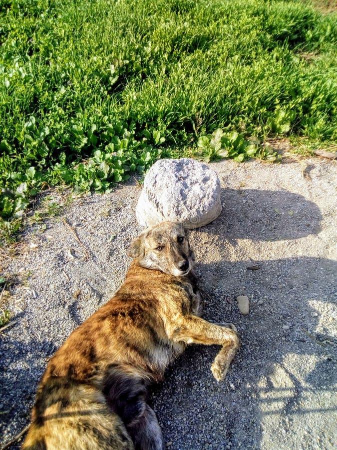 En hund som tycker om vintrar royaltyfri fotografi