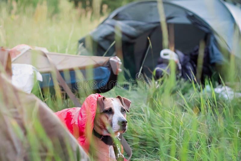 En hund vilar i en sovsäck framme av ett kanotfartyg på den campa platsen royaltyfria foton