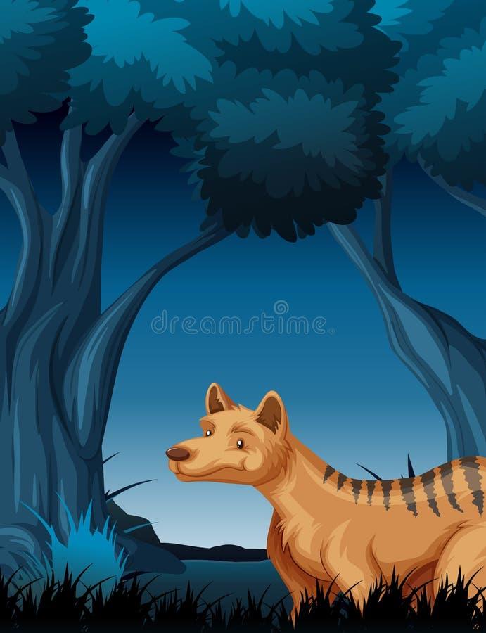 En hyena i mörk skog royaltyfri illustrationer