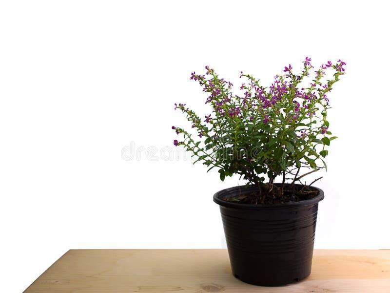 En hylla och härliga blommor arkivfoto