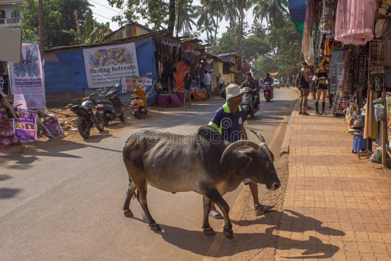 En indisk man går bredvid en brun grå buffel över gatan royaltyfri bild