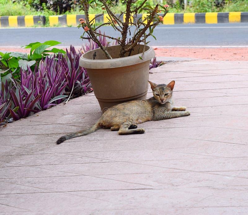 En inhemsk katt - husdjur - sammanträde bredvid en kruka på golv och att ge sig som är fotografiskt, poserar arkivbild