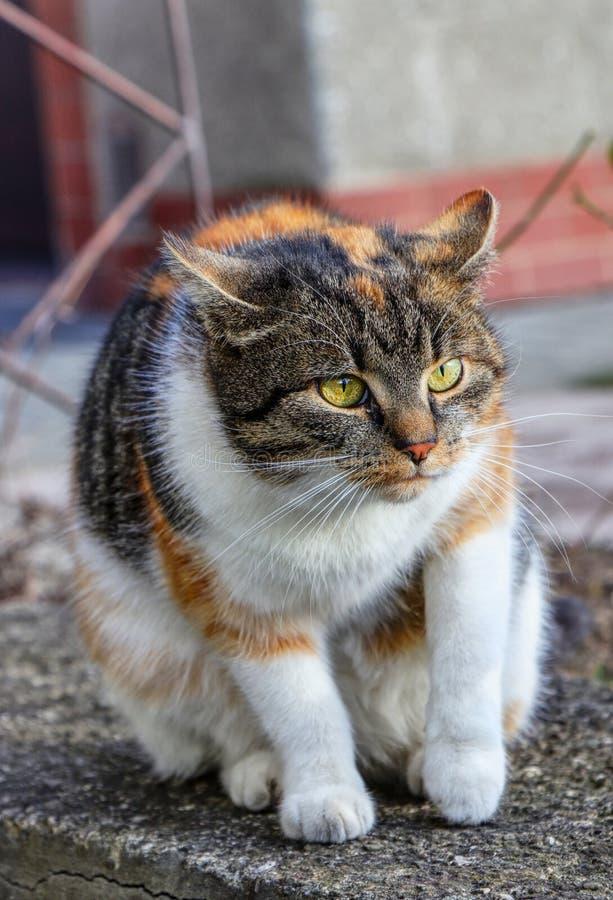 En inhemsk och skämtsam katt som sitter på den låg väggen och henne för att avgöra att gå bort En katt är i rörelse Intressera po royaltyfri fotografi