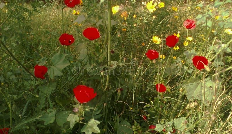 En jardín salvaje fotografía de archivo