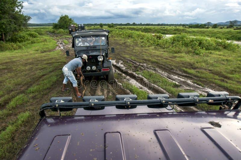 En jeep hakar upp till en annan jeep för att få dragen ut ur ett myrhål i den Kaduala nationalparken i centrala Sri Lanka royaltyfria bilder
