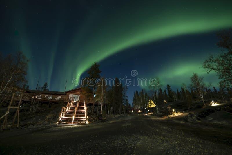 En journalkabin i pinjeskog under norrsken på YellowKnife fotografering för bildbyråer