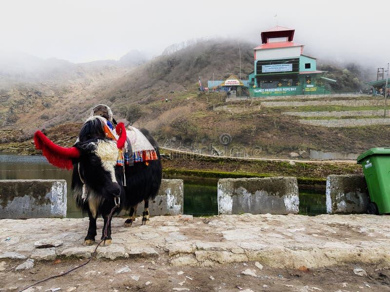 En julio de 2018, Sikkim la India, un yac que monta adornado en vestido y campanas cerca del lago del tsomgo en Sikkim la India imagen de archivo libre de regalías