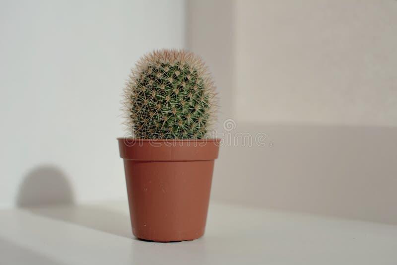 En kaktus är blomman av en öken fotografering för bildbyråer
