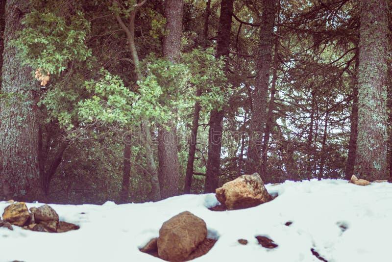 En kall härlig snöig dag i is i vinter arkivbild