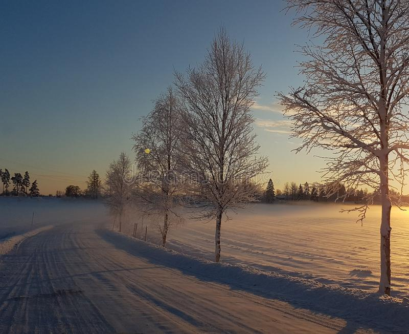 En kall vinterdag royaltyfri bild