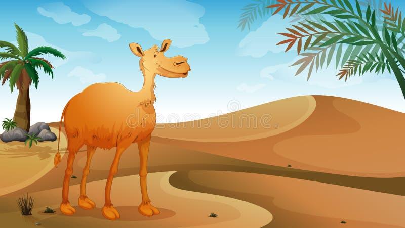 En kamel i öknen royaltyfri illustrationer
