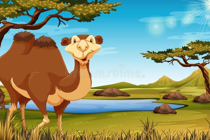 En kamel i savana vektor illustrationer