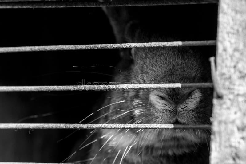 En kanin fotografering för bildbyråer